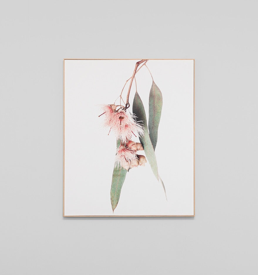 Falling Eucalyptus Framed Canvas