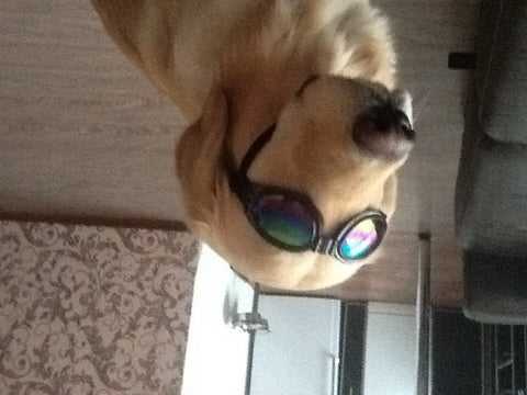 dog-glasses-retriever-dog-lover-good-glasses