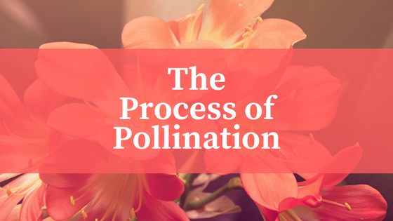 All About Pollination