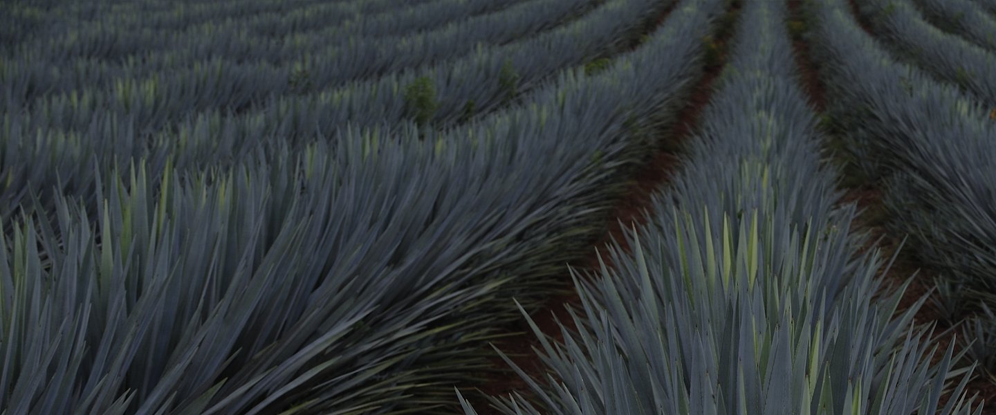 Secrets and facts about the best tequila