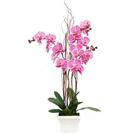 Blooming Purple Phalaenopsis Orchid In Pot With Fresh Soil