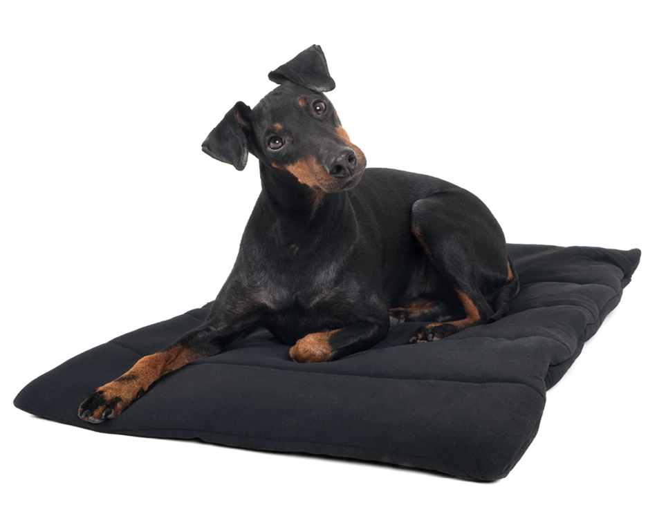 Black Dog Blanket