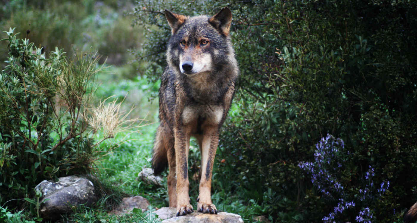 Jo Blogs El Chorro - A Trip to the Wolf Park