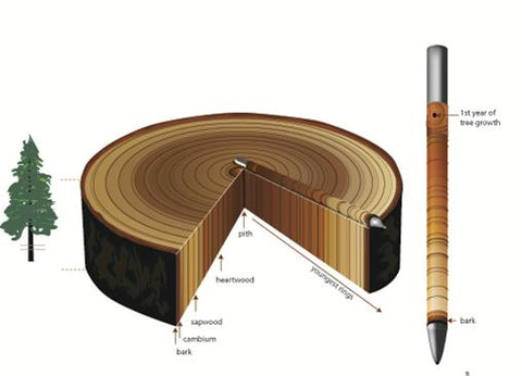 Tree ring science a tree grows from the center each year adding another ring onto its stem tree ring records show the range of natures conditions for example temperature ccuart Gallery