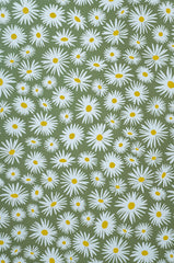 Daisy Green Wallpaper