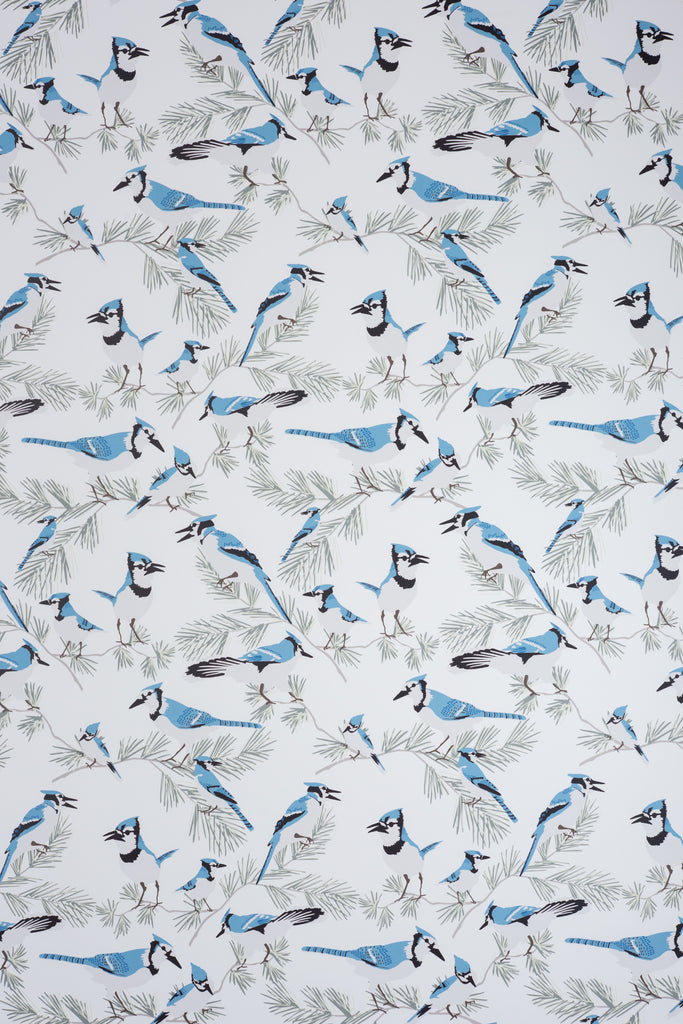 Blue Jay Wallpaper - WYNIL by NumerArt Wallpaper and Art