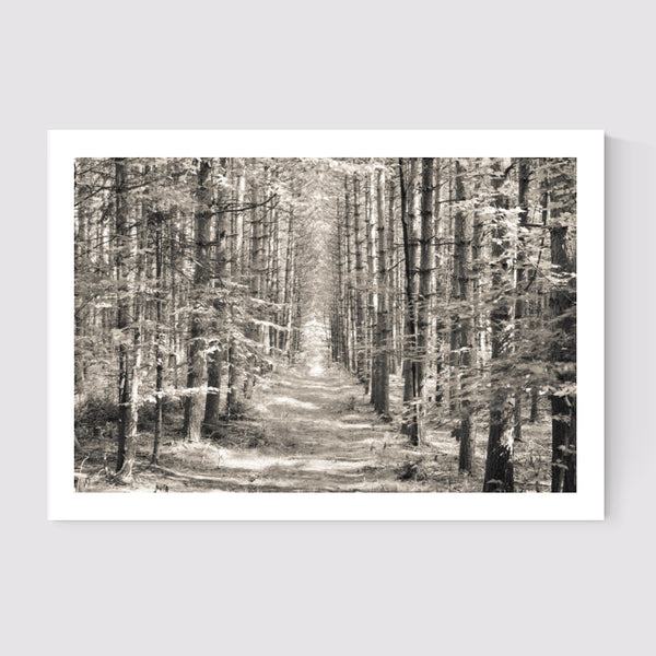 Forest 1 Art Print - WYNIL by NumerArt Wallpaper and Art