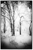 Calming Winter Forest HD Mural