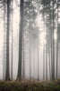 Mist Dawn Forest Mural - WYNIL by NumerArt Wallpaper and Art
