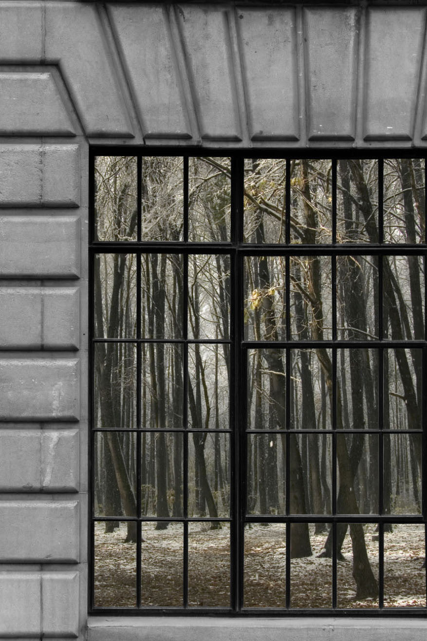 Forest Trail Through Windows Mural