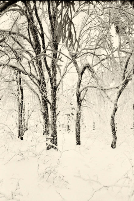 Soft Light Snow Forest HD Mural - WYNIL by NumerArt Wallpaper and Art