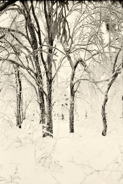 Soft Light Snow Forest HD Mural