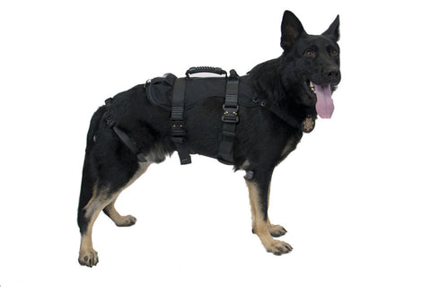 CMC K9 ProSeries Rappel Harness