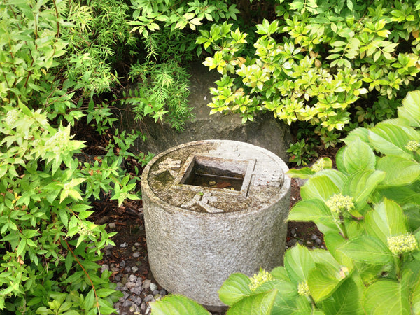 Workshop at NION Week:  Japanese Gardening in small/urban spaces.  Tuesday, 4 Sept 2018, 15:30-17:00 Plants B o o m k i  - B o o m k i
