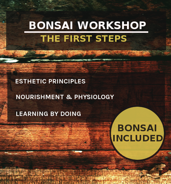 Beginner Bonsai Workshop:  First Steps Workshop B o o m k i - Japangarten Bonsai Wabikusa - B o o m k i