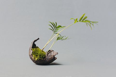 Boomki Bonsai Berlin