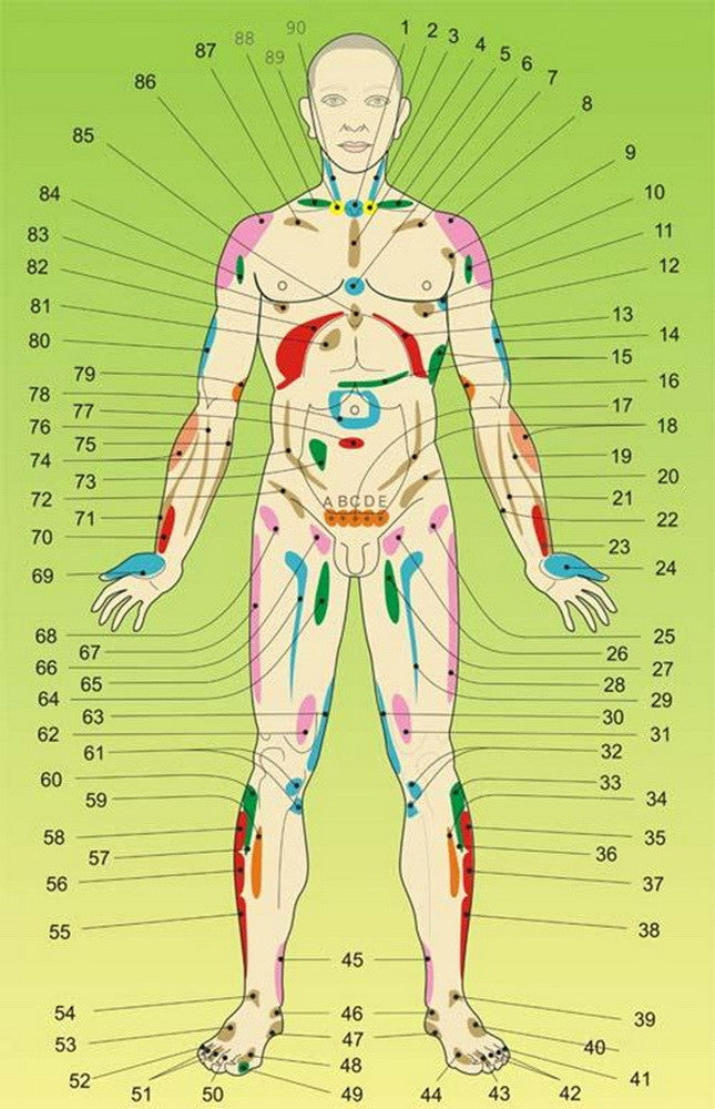 Acupuncture body meridians model reflexology massage lifehacks