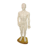 Acupuncture Body Model: Meridianal and Acupoints