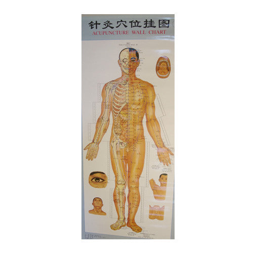 Acupuncture Points Wall Charts Diagrams (set of 3 charts)