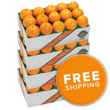 Florida Navel Oranges<br>(Choose a Size)