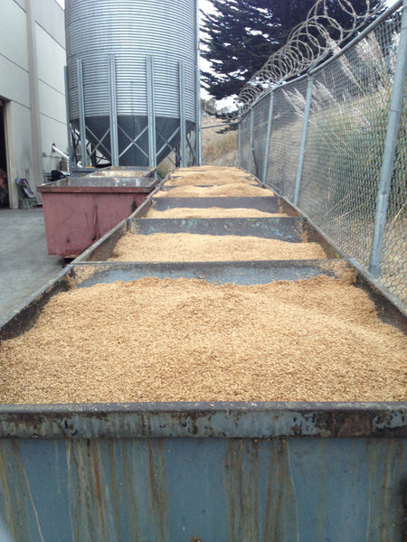 "What usually happens to brewers' ""spent"" grain?"