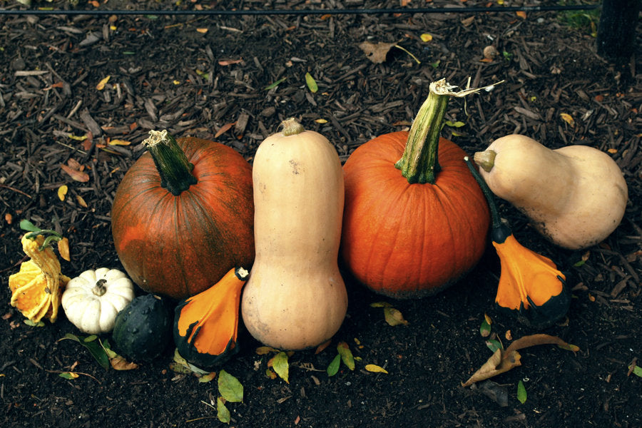From Pumpkin Guts to Glory: Squashing Food Waste This Halloween