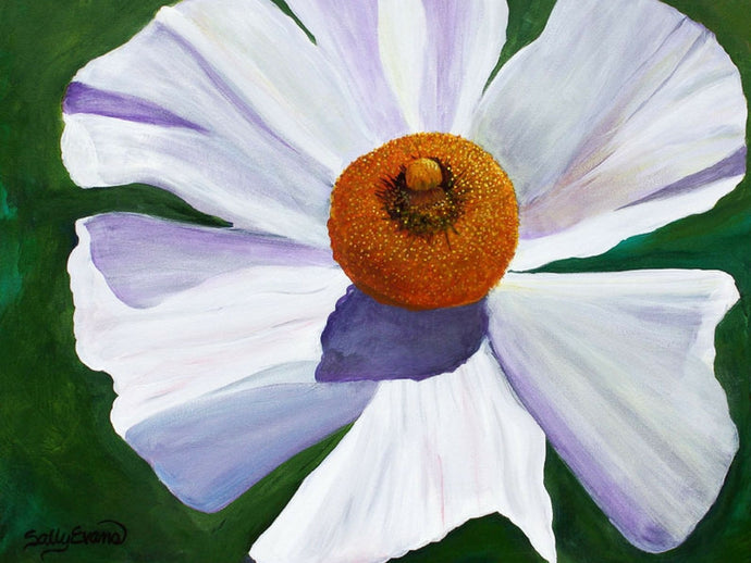 white Matilija poppy painting