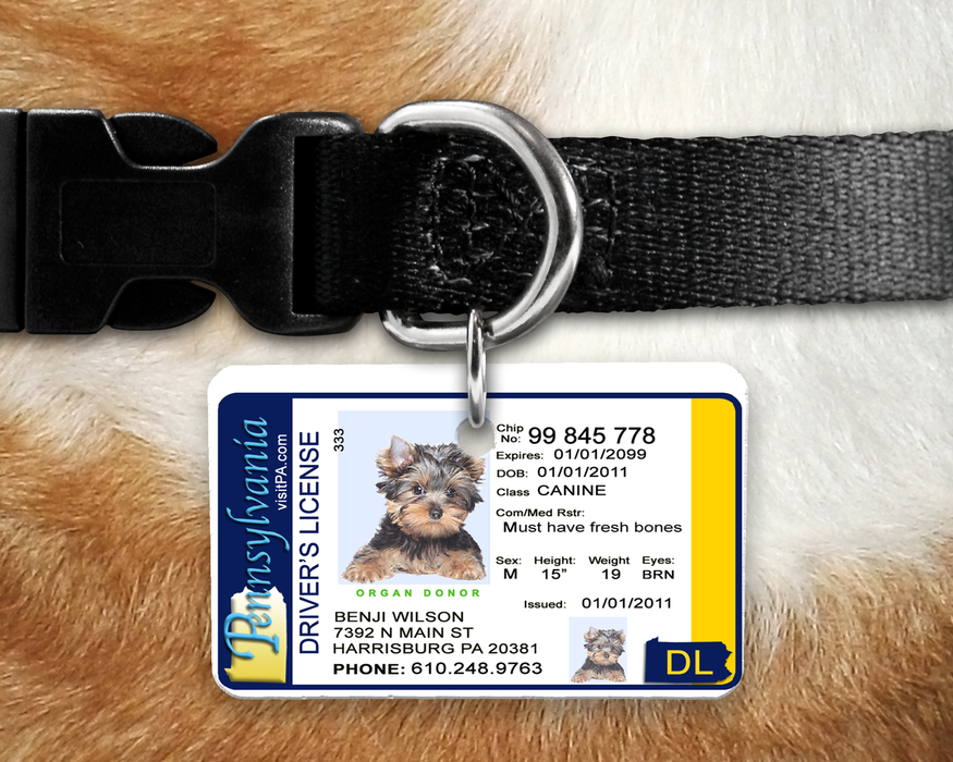 Pa Tag Pet By Drivers Identification Pennsylvania - License Inspired The