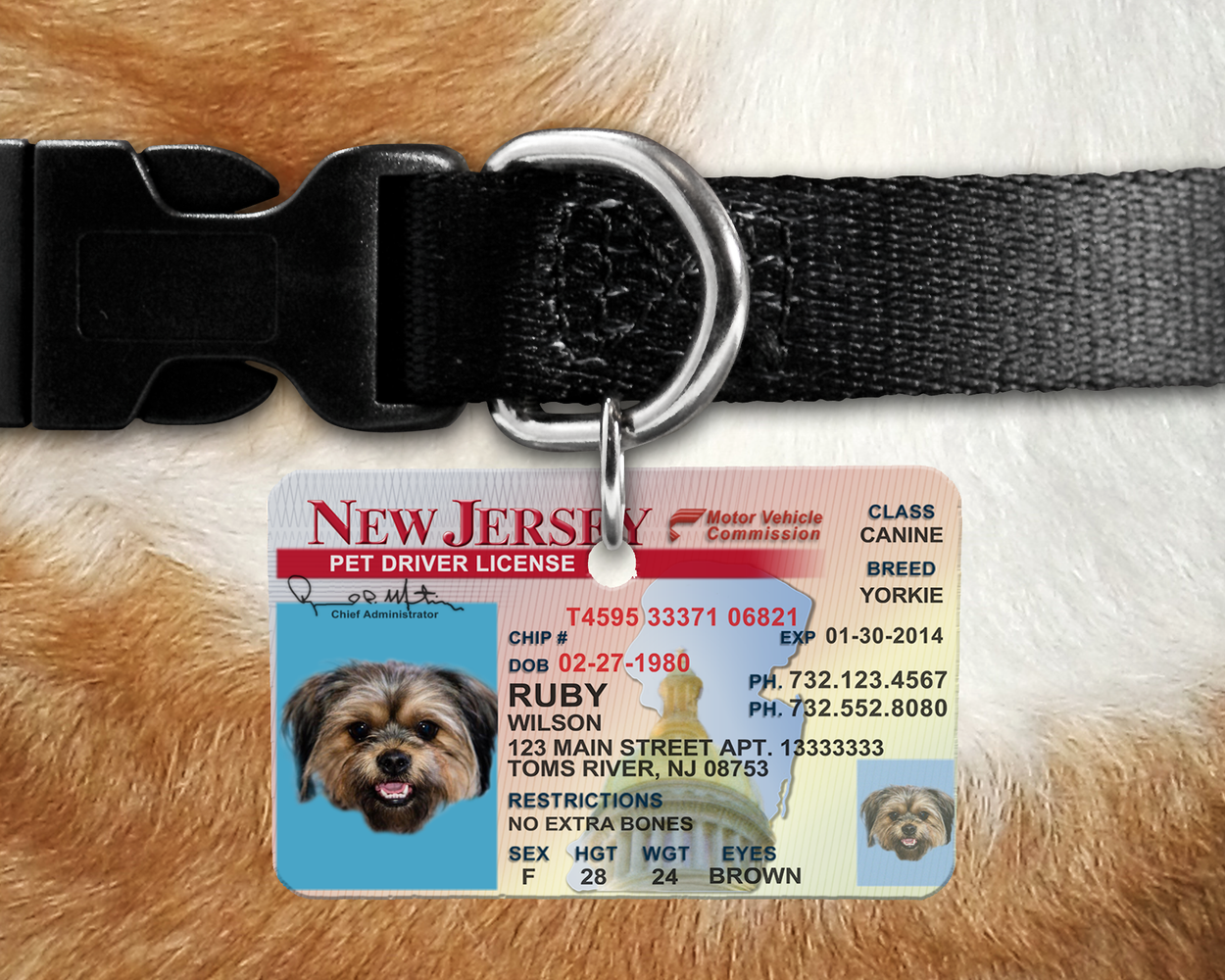NJ Pet Identification Tag - Inspired by the NJ Drivers License