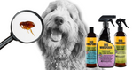 How to Get Rid of Fleas Naturally: Your go-to Flea-Busting checklist