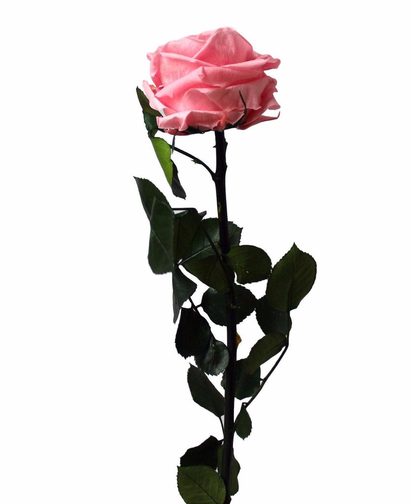 Long Stem Rose - Light Pink - INFINI roses that last a year