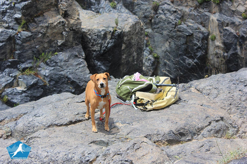 Survival Dog Food Basics - For Overlanding or when the SHTF