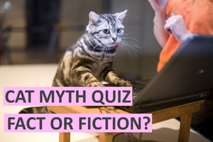Cat Myth Quiz: Fact or Fiction? How Well Do You Know Your Cats?