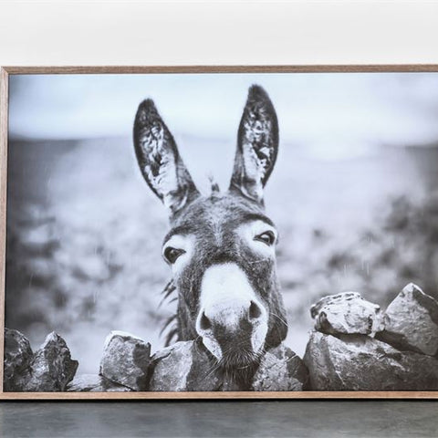 """Donkey"" Framed Canvas 29""x 39"""