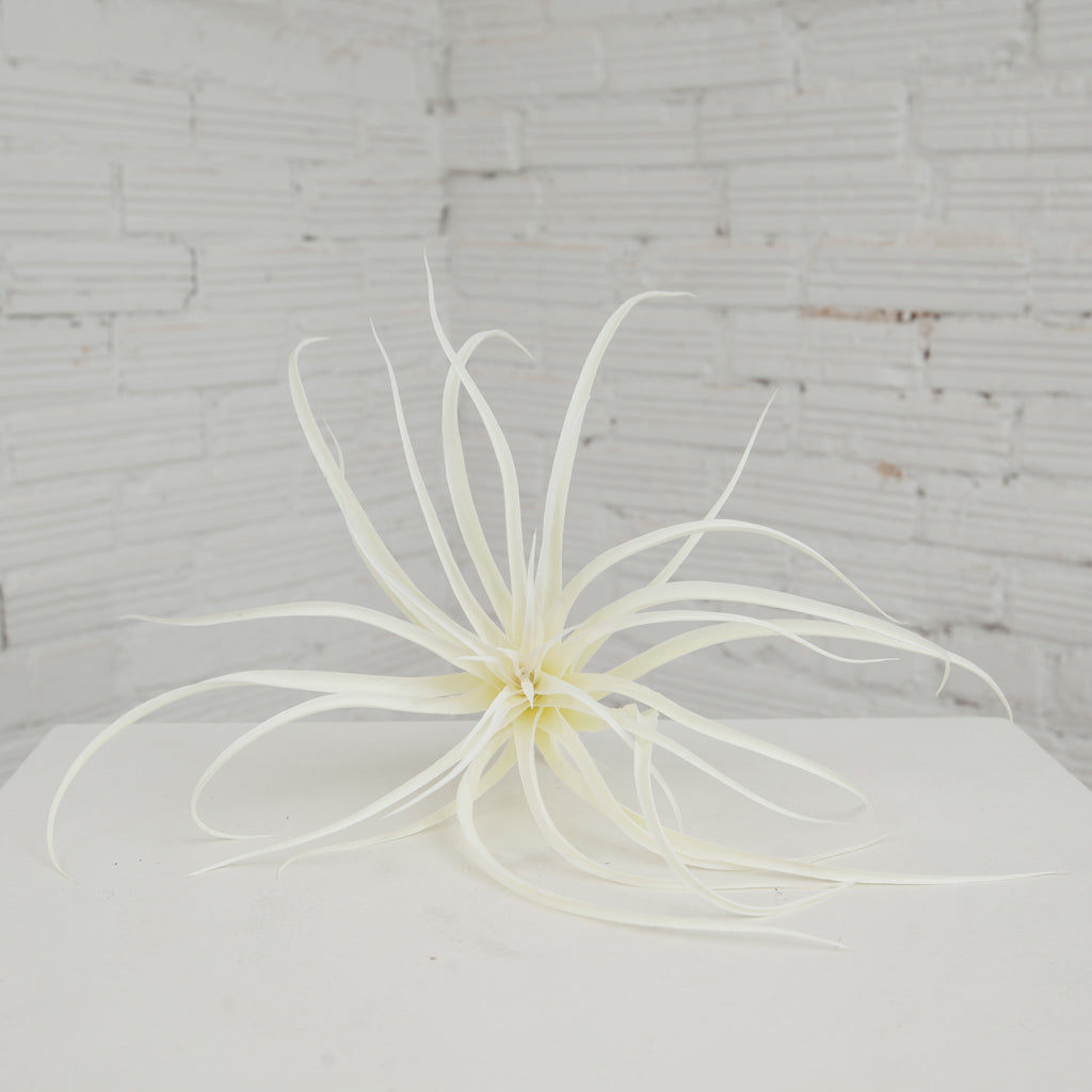 Large White Air Plant
