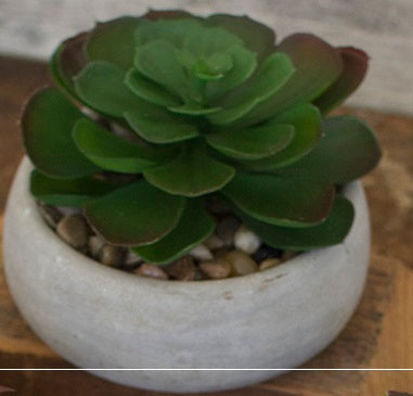 Artificial Succulent In Low Cement Pot