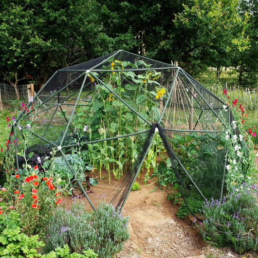 DIY Kit: Up to 4.8m (16ft) Walk In Vegetable / Fruit Cage Dome Kit