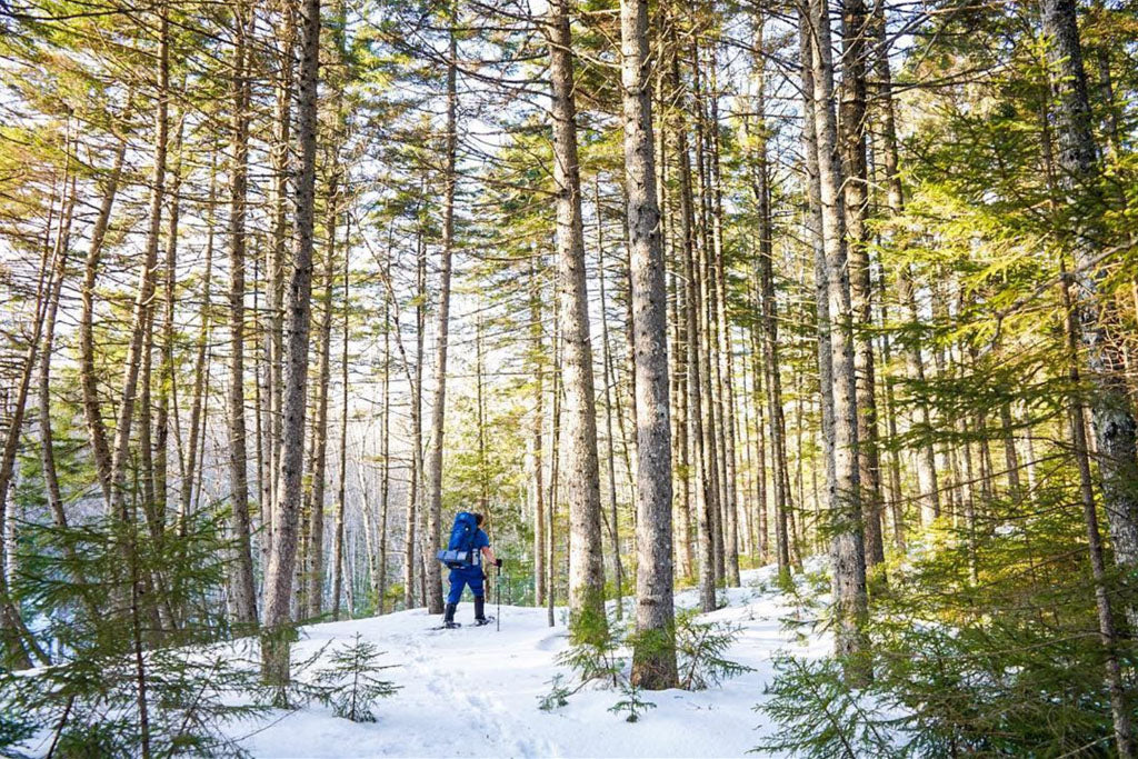 Backpacker snowshoeing through tall trees