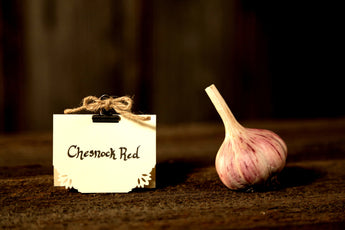 1/2 lb Chesnok Red - Peninsula Garlic Farm