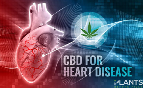 CBD For The Heart