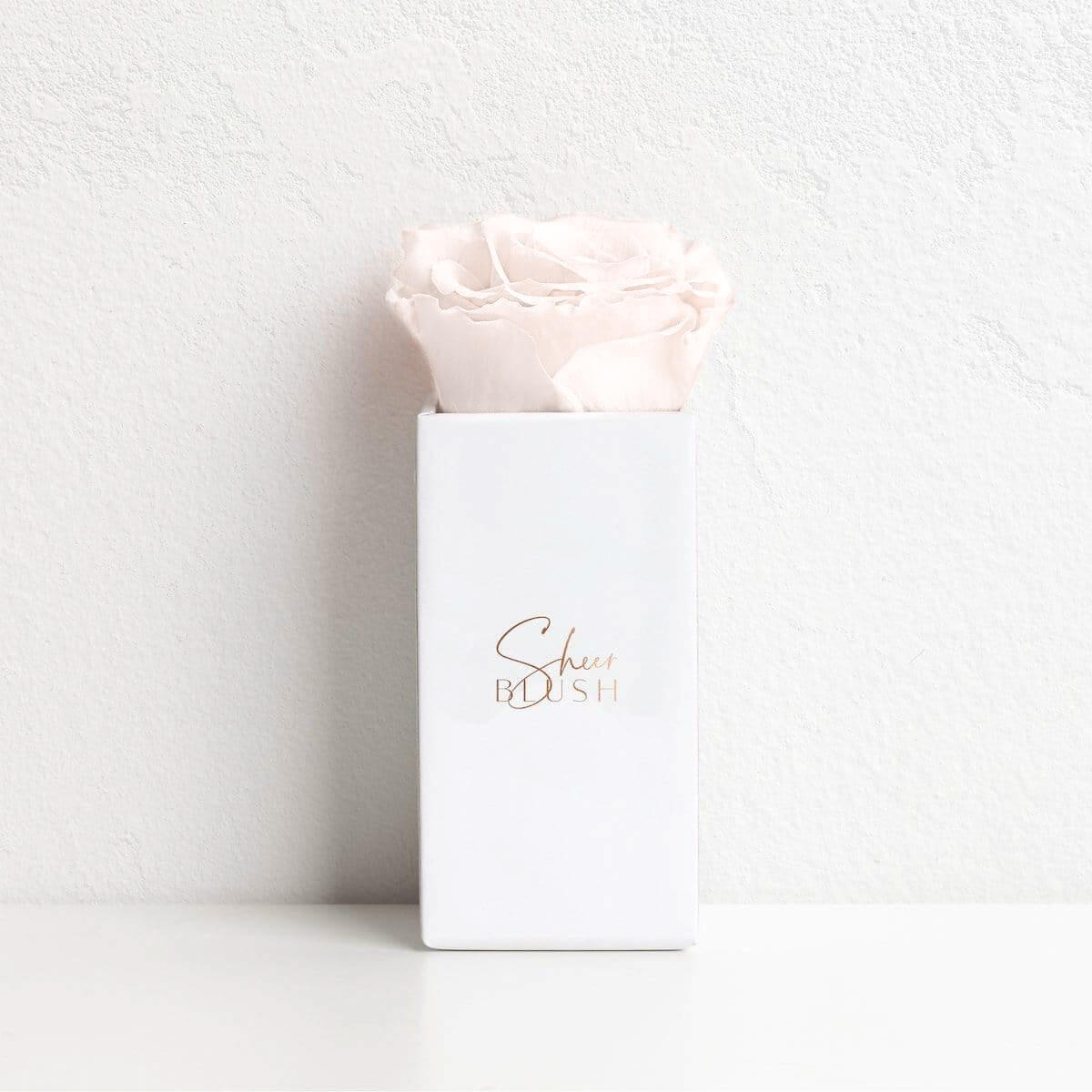 Soft Blush Single Rose