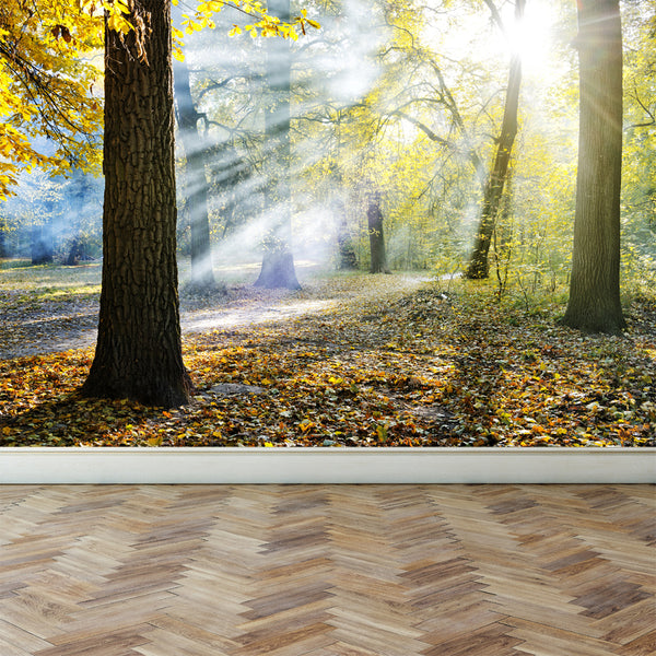 Wall Mural Sunlight in the park, Peel and Stick Fabric Wallpaper for Interior Home Decor