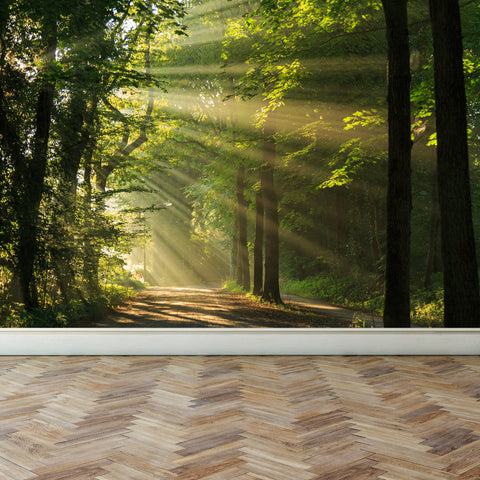 Wall Mural Shining through the Forest Trees, Fabric Wallpaper for Interior Home Decor