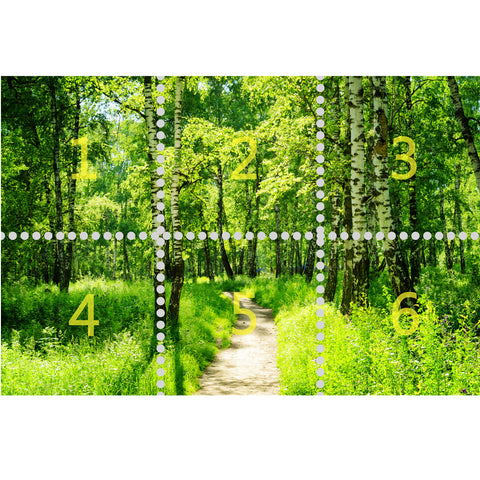 Wall Mural Birch Forest in Summer, Fabric Wallpaper for Interior Home Decor