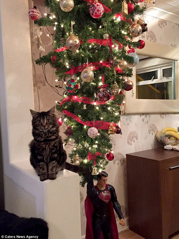 2f23de8800000578 3349422 image a 14_1449499771449_largejpgv1513755638 - How To Keep Cat Away From Christmas Tree