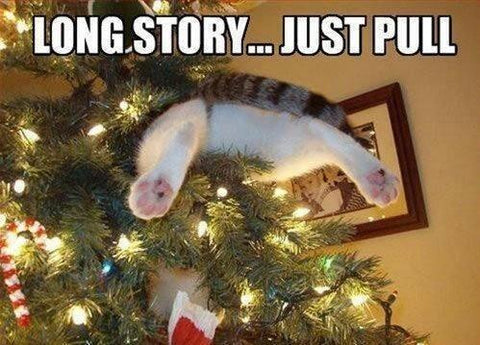 Cats and Christmas Trees: 10 Ways to Maximize Safety & Minimize ...