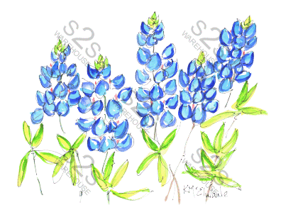 Art by KM - Bluebonnets - Sublimation Print