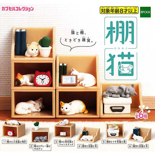 Cats in Shelves