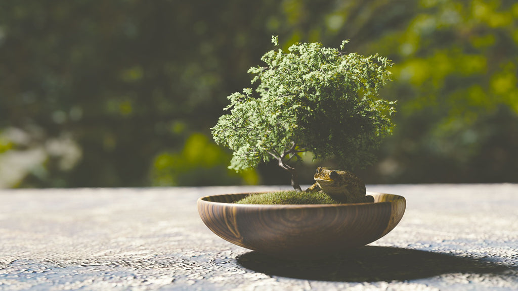 Choosing A Bonsai Plant