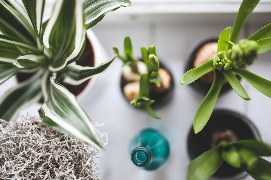 Picking Out Plants For Indoor Gardening